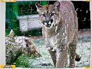 Флеш игра онлайн Большие коты / Big Cats