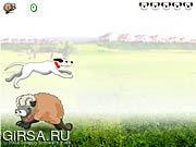 Флеш игра онлайн Прыжки через овец