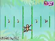 Флеш игра онлайн Мартышка и фрукты / Jungle Spider Monkey