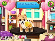 Флеш игра онлайн Красивые животные / Paws to Beauty: Valentine Edition