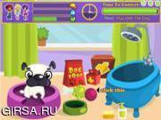 Флеш игра онлайн Конкурс для милых собачек / Pretty Dog Contest