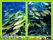 Флеш игра онлайн Подводные сходства / Underwater Similarities