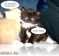 супер котяра